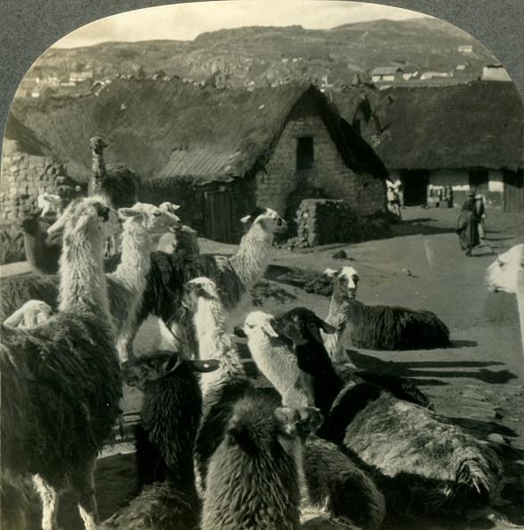 Andes「Llamas」:写真・画像(19)[壁紙.com]