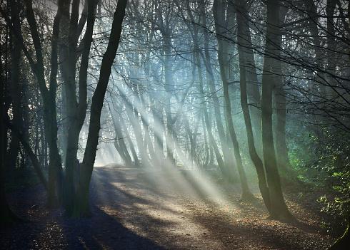 Glade「Woodland sunbeams」:スマホ壁紙(17)