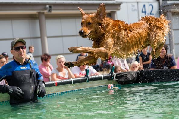 """Tradeshow「Leipzig Holds """"Dog And Cat 2018"""" Pets Trade Fair」:写真・画像(13)[壁紙.com]"""