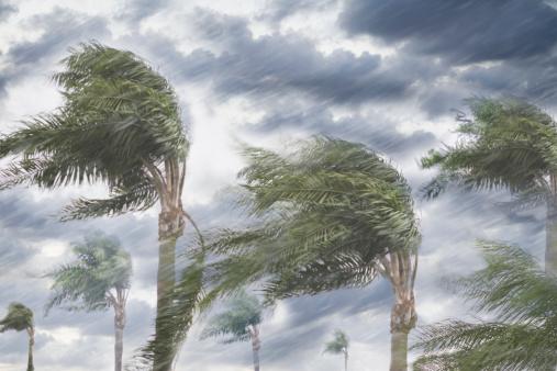 Hurricane - Storm「Rain and storm winds blowing trees」:スマホ壁紙(0)