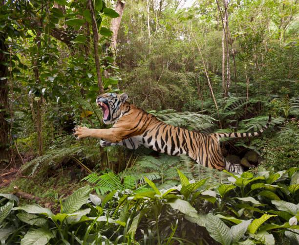 Leaping Tiger In The Jungle:スマホ壁紙(壁紙.com)