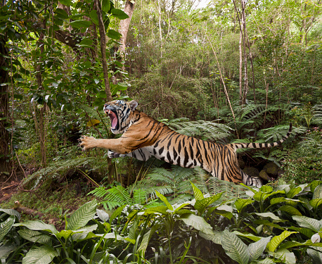 Endangered Species「Leaping Tiger In The Jungle」:スマホ壁紙(15)