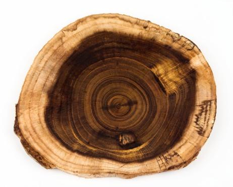 Log「Slice From Laburnum Log Showing Concentric Growth Rings」:スマホ壁紙(16)