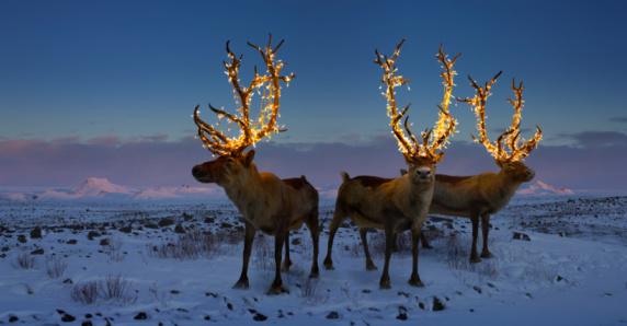 Iceland「Three reindeers with lights in antlers (digital composite)」:スマホ壁紙(18)