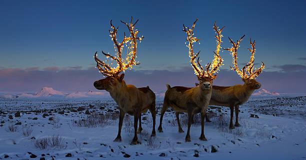 Three reindeers with lights in antlers (digital composite):スマホ壁紙(壁紙.com)