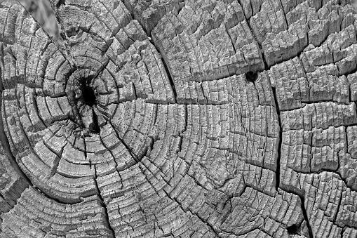 Log「Tree rings in tree stump」:スマホ壁紙(5)