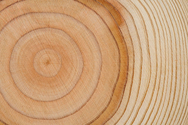 Tree rings texture background:スマホ壁紙(壁紙.com)
