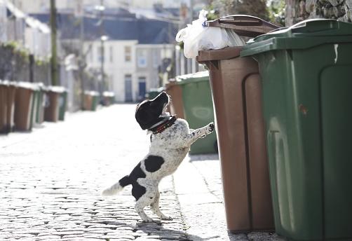 Stray Animal「Dog jumping up to outside bin」:スマホ壁紙(16)