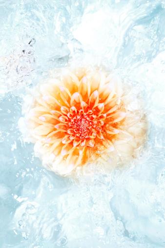 Water Surface「Flower in water」:スマホ壁紙(11)