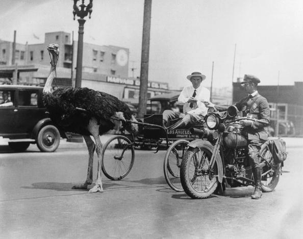 Traffic「Ostrich Pull」:写真・画像(18)[壁紙.com]