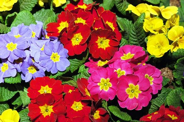Flower「Philadelphia's Famed Flower Show Celebrates Mother Nature」:写真・画像(5)[壁紙.com]