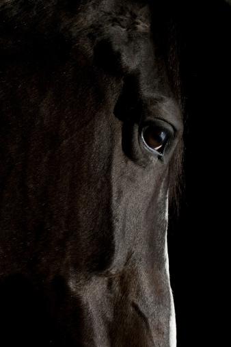 Horse「Black Horse」:スマホ壁紙(4)