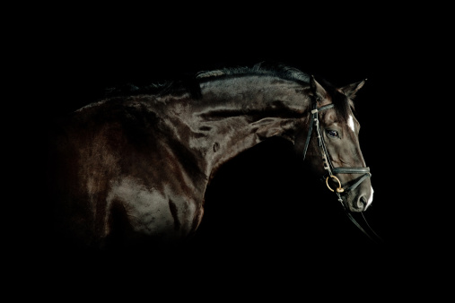 Horse「Black Horse Portrait」:スマホ壁紙(5)