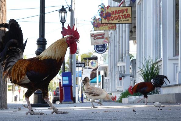 Street「Key West Faces Tough Economic Road As Coronavirus Closures Affect Tourism」:写真・画像(19)[壁紙.com]