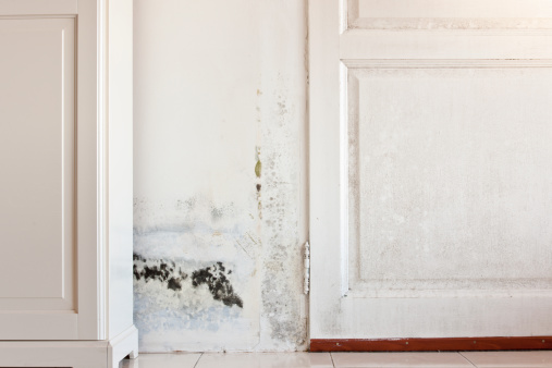Deterioration「Mouldy Mold Stains on Damp Door and Wall behind Cabinet」:スマホ壁紙(6)