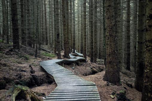 Bizarre「Dark Forest Trail」:スマホ壁紙(10)