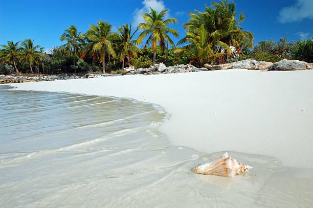 Shell washes up on tropical beach:スマホ壁紙(壁紙.com)