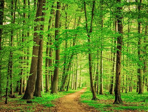 Natural Parkland「Green Forest in spring」:スマホ壁紙(7)