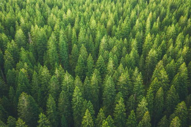 Green Forest:スマホ壁紙(壁紙.com)