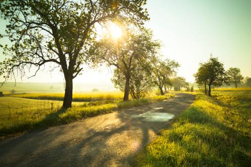Meadow「Sunrise over fields」:スマホ壁紙(17)
