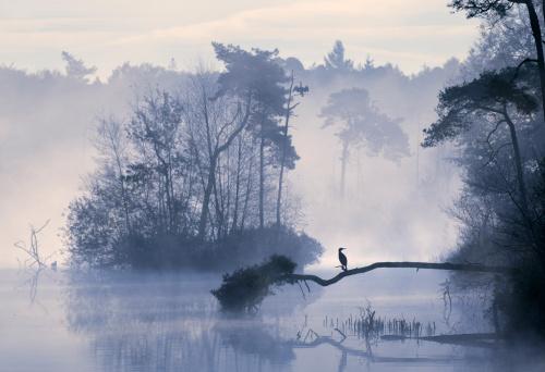 North Brabant「Sunrise over misty lake in the Netherlands.」:スマホ壁紙(17)