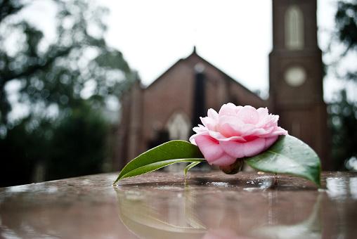 Memories「Rose on grave」:スマホ壁紙(6)