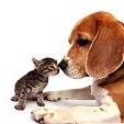動物とペットカテゴリー(壁紙.com)