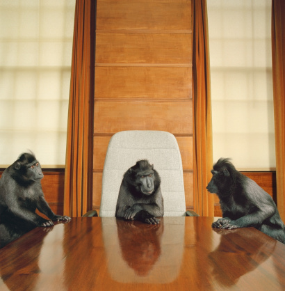 Animals In Captivity「Three macaques around conference table」:スマホ壁紙(13)