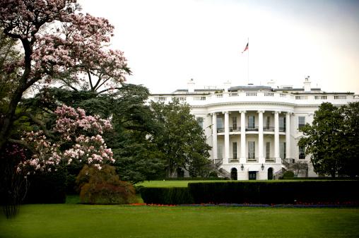 花見「ホワイトハウス」:スマホ壁紙(4)