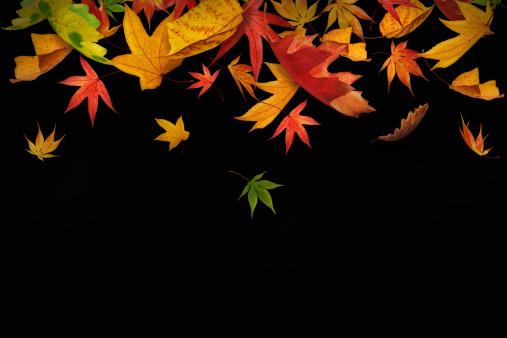 かえでの葉「Falling 秋の葉」:スマホ壁紙(19)
