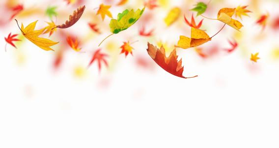かえでの葉「Falling 秋の葉」:スマホ壁紙(3)