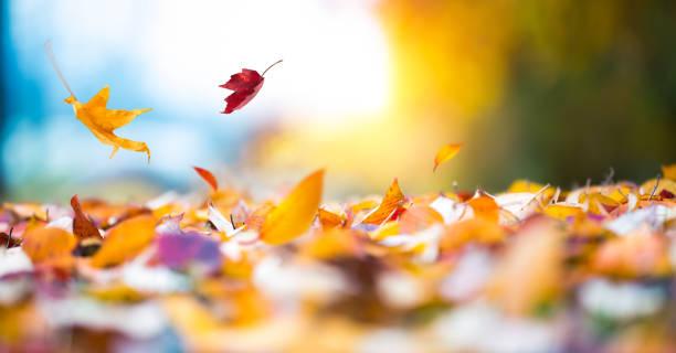 Falling Autumn Leaves:スマホ壁紙(壁紙.com)