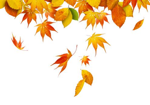 かえでの葉「Falling 秋の葉」:スマホ壁紙(2)