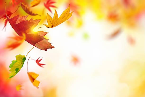 Falling 秋の葉:スマホ壁紙(壁紙.com)