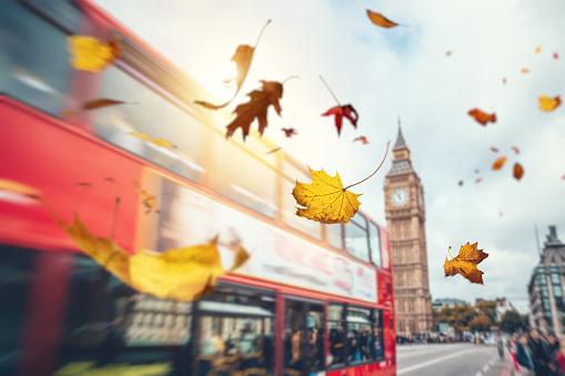 かえでの葉「ロンドンの秋落ち葉」:スマホ壁紙(14)