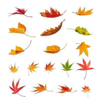 かえでの葉「Falling 秋の葉に白背景」:スマホ壁紙(14)