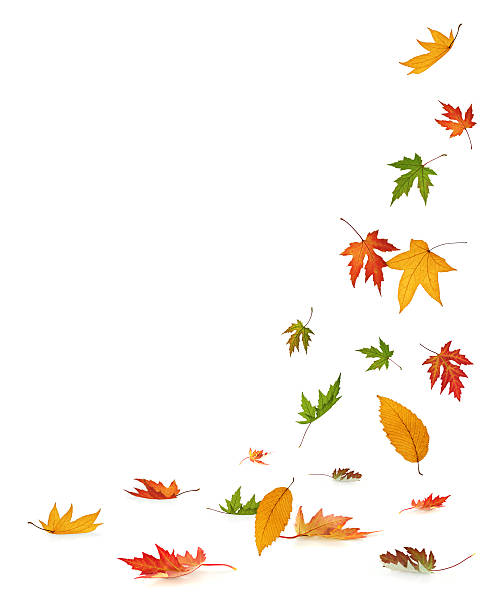 Falling 秋の葉に白背景:スマホ壁紙(壁紙.com)