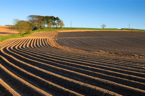 Plowed Field「Newly planted potato field furrows, Pembrokeshire」:スマホ壁紙(13)