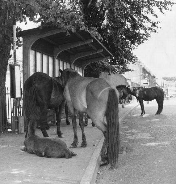 New Forest「New Forest Ponies」:写真・画像(6)[壁紙.com]
