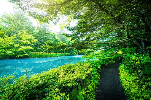 River「Kumobaike (Kumoba pond) in Karuizawa」:スマホ壁紙(17)