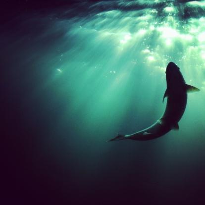Ecosystem「Steelhead trout spawning」:スマホ壁紙(5)