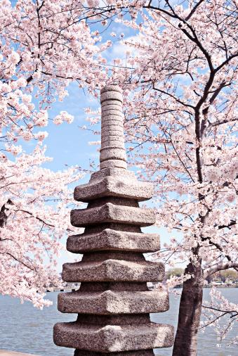 花見「日本のスタイルの祭壇に桜の花の背景」:スマホ壁紙(18)