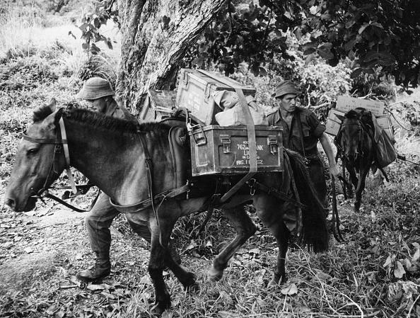 Horse「Jungle School」:写真・画像(10)[壁紙.com]
