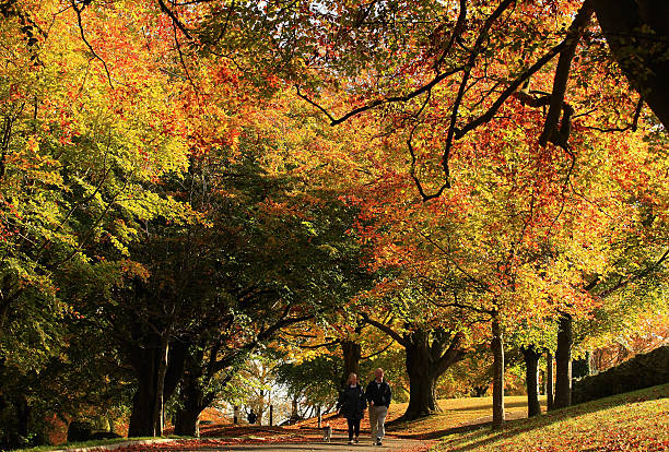 Spectacular Autumn Colours Are Seen After Mild Temperatures Over The Last Two Months:ニュース(壁紙.com)