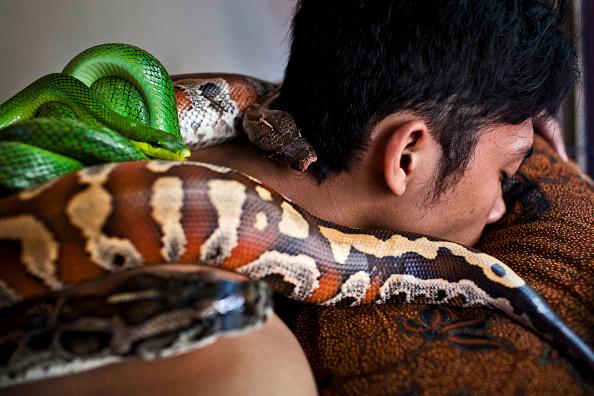 Spa「Reflexology Spa Uses Pythons To Massage Clients」:写真・画像(13)[壁紙.com]