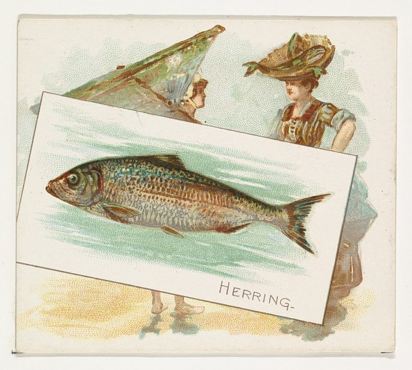1880-1889「Herring」:写真・画像(19)[壁紙.com]