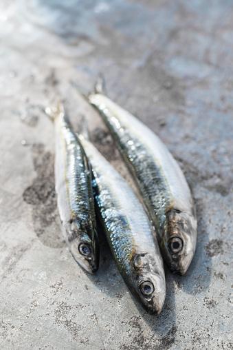 楽園「Raw sardine fishes」:スマホ壁紙(12)