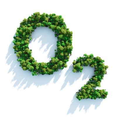 Amazon Rainforest「o2」:スマホ壁紙(17)