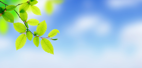 Abstract Backgrounds「Fresh Green Leaves - Panorama (XXXL)」:スマホ壁紙(16)