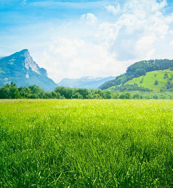 Fresh green meadow in mountains:スマホ壁紙(壁紙.com)
